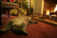 Cosy kitty by the fireside. | warmed by the fire ...