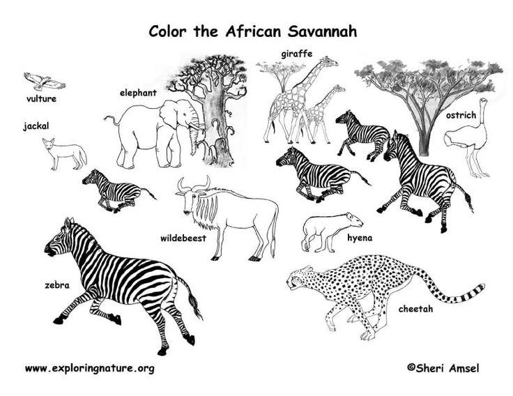 1000+ images about Africa Savannah Unit study on Pinterest