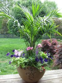 Container garden. Palms. Annuals. | FLOWERS - GARDENS ...