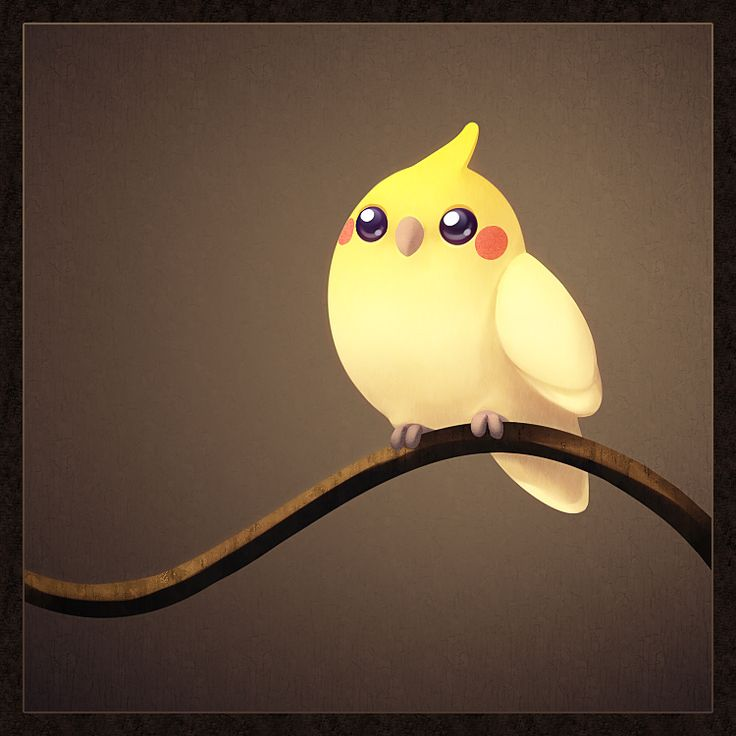 Cute Cockatiel Wallpaper Superschattige Tekening Van Een Valkparkiet Cockatiel