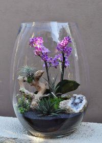 Orchid Air Plant Terrarium | Living Arrangements by Jolana ...