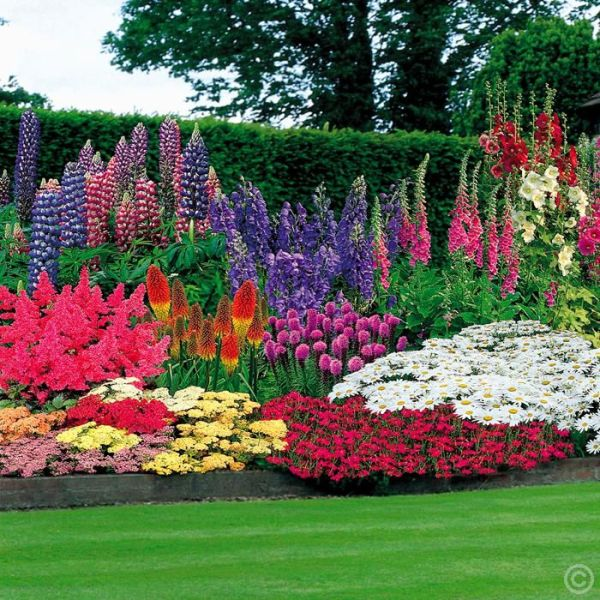 perennial garden 100 bulbs