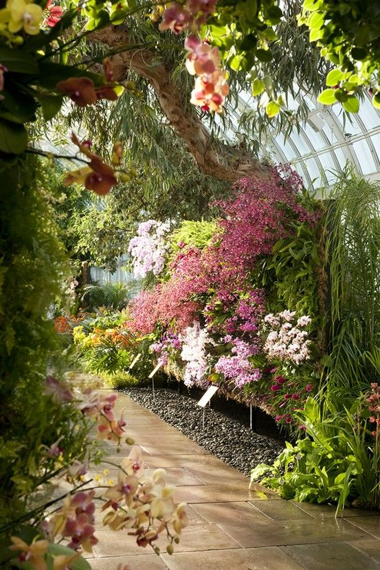 25 Best Ideas About Orchids Garden On Pinterest Orchid Care
