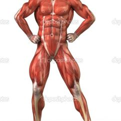 Muscular System Diagram Without Labels Dodge Neon Wiring Human Unlabeled - Google Search | Pinterest ...