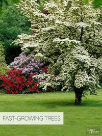 10+ best ideas about Privacy Trees on Pinterest | Privacy ...