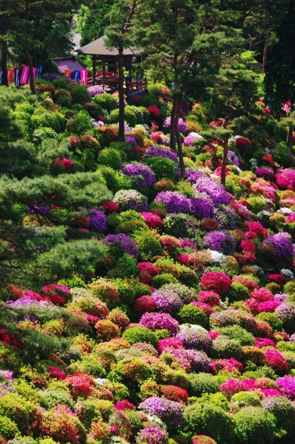 azalea bushes shiofune kannon