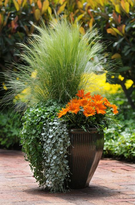 25 Best Ideas About Outdoor Flower Pots On Pinterest Container