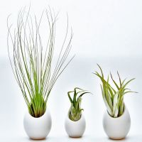 Hanging Air Plant Container - 2 Large 1 Mini Ceramic Vases ...