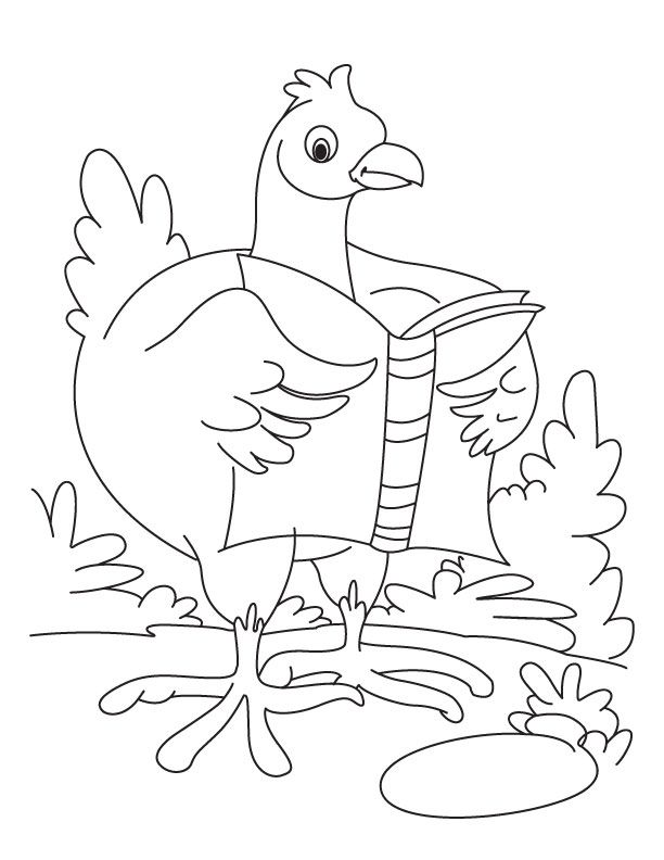 1000+ images about A CRAFTS CHICKENS 4 TAM COLOR on