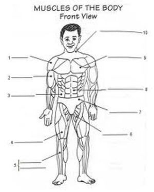 Worksheet | Homeschool The Human Body | Pinterest | Image search, Yahoo search and Drawings