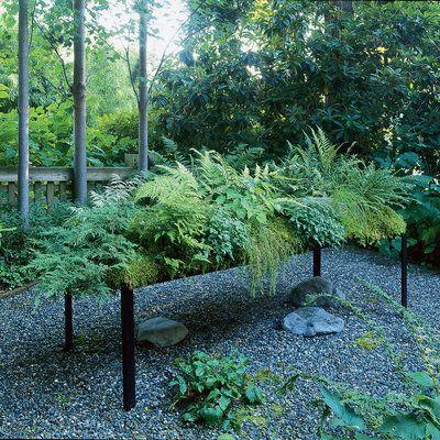 The 25 Best Ideas About Ferns Garden On Pinterest Ferns Fern