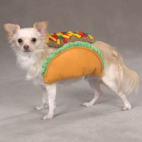 Never dress your dog up as a taco! | Animals I love ...