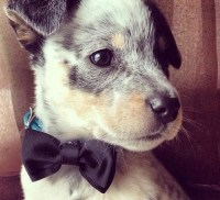 17 Best images about Animals in bow ties! on Pinterest ...
