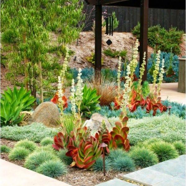 colorful dry garden plants desert