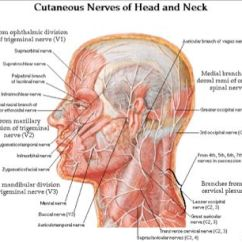 Pressure Points Diagram Massage Redarc Dual Battery Isolator Wiring Throat Muscles | Of The Head And Neck Migraine~ Fibrℴmyalgia~ Ms Pinterest ...