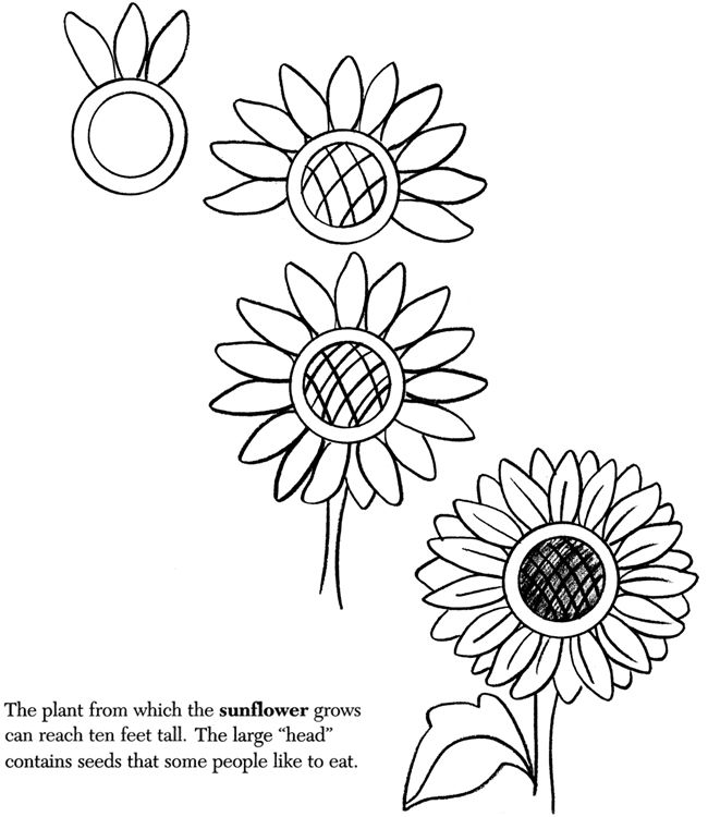 99 best images about How to draw tutorials: Flowers on