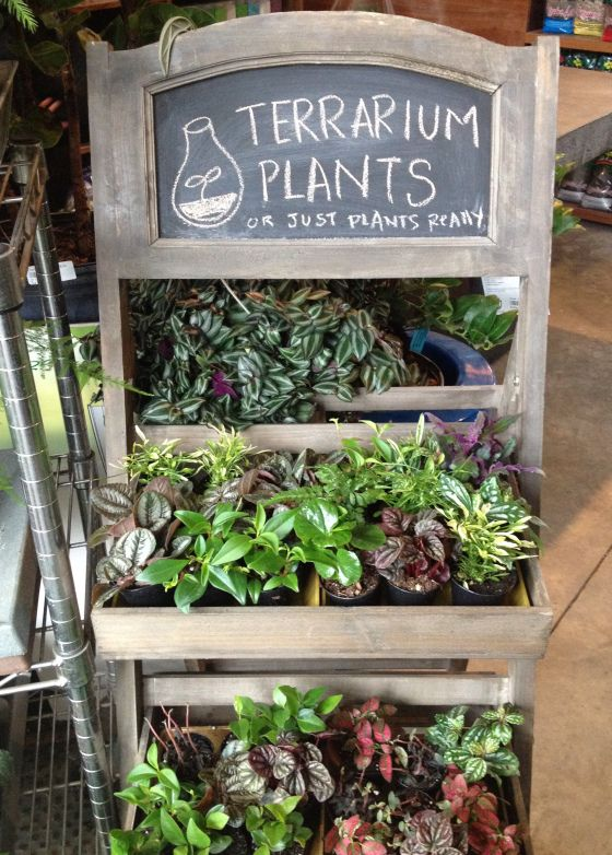 298 Best Images About Crazy Display Ideas On Pinterest Gardens