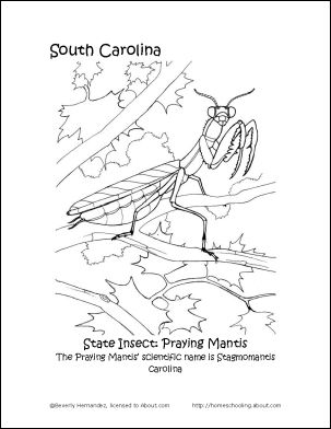 56 best images about 3rd Grade SC State History on Pinterest