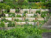 22 best images about Hillside Garden on Pinterest ...