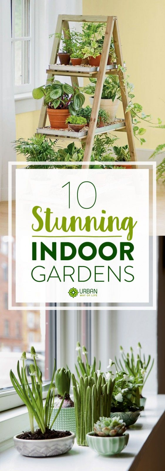 25 Best Ideas About Indoor Gardening On Pinterest Indoor Herbs