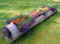Cute idea...flower bed in a hollowed out tree | Equestrian ...