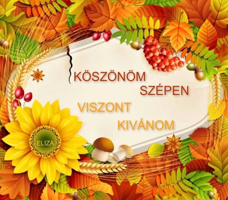18 Best Images About KSZNM On Pinterest Search