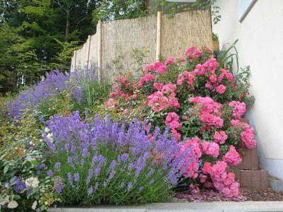 Les 25 Meilleures Idées De La Catégorie Garten Lavendel Sur
