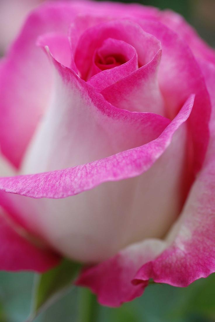 25 best ideas about Rose garden design on Pinterest  Garden design Backyard garden design and