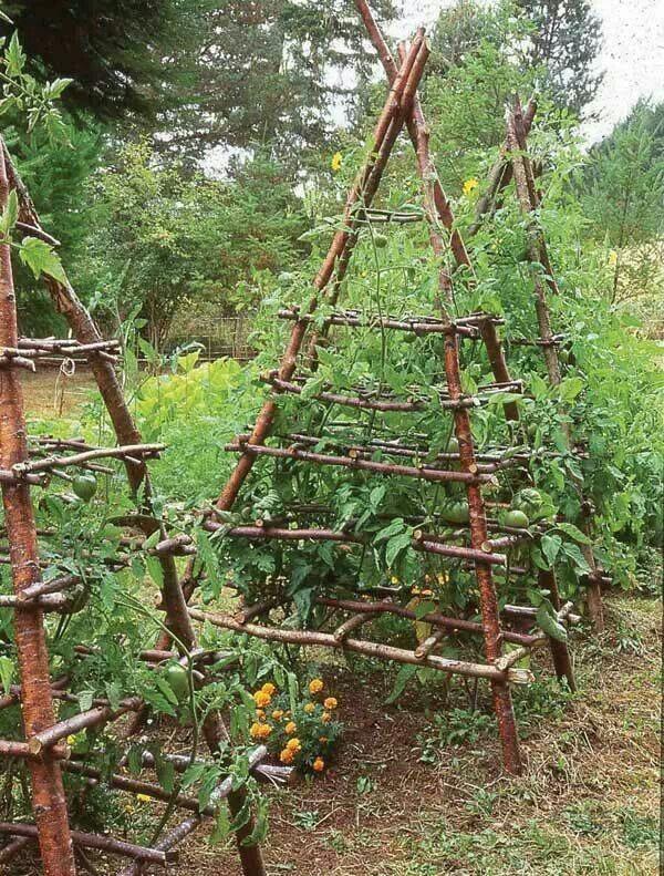 Les 184 Meilleures Images à Propos De Garden Trellis Pergola