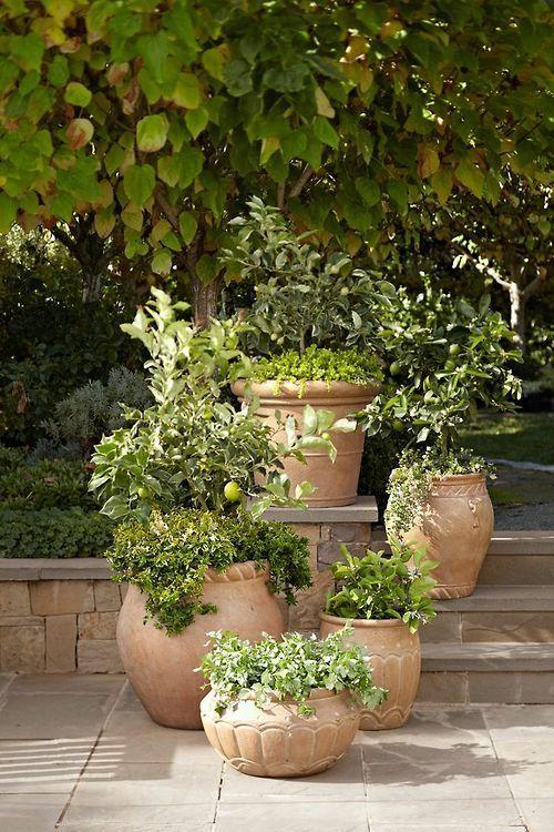 25 Best Ideas About Italian Garden On Pinterest Italian