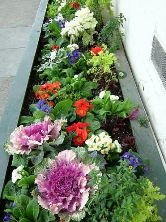 31 Best Images About Small Space Gardening On Pinterest Gardens