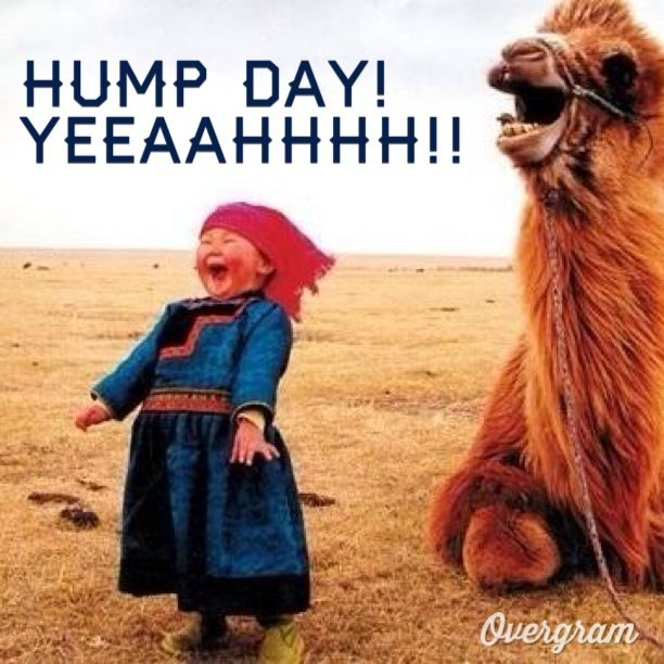 Pictures It S Hump Day