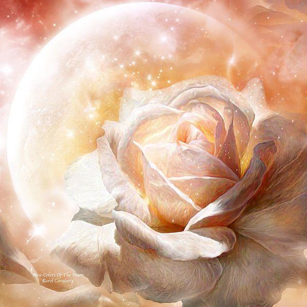 Rose  Colors Of The Moon art by Carol Cavalaris  Rose Art  Pinterest  Colors Moon art and