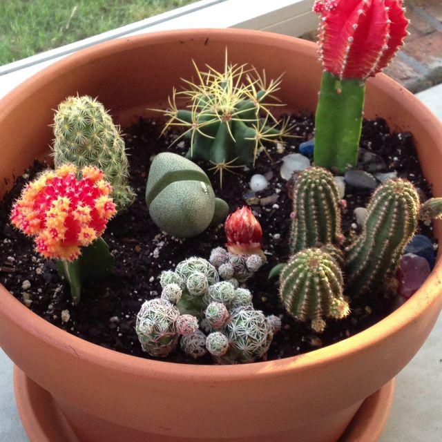 25 Best Ideas About Mini Cactus Garden On Pinterest Small