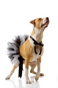 1000+ images about Dog costumes on Pinterest | Shark ...
