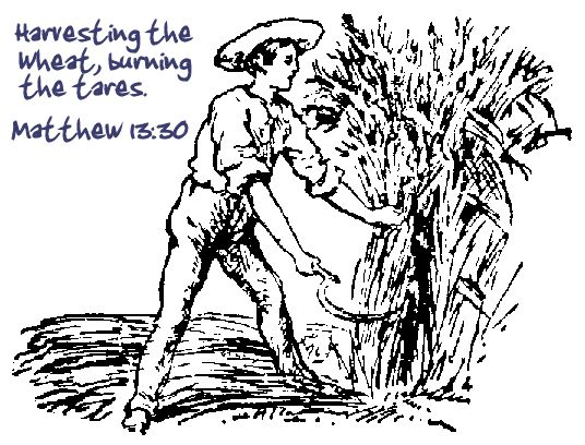 The Wheat and tares....Harvesting of the Saints....
