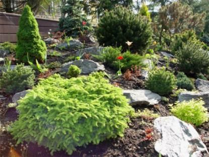 1000+ images about Landscaping a sloped yard on Pinterest