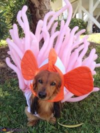 1000+ images about Pet costumes on Pinterest | Cats ...