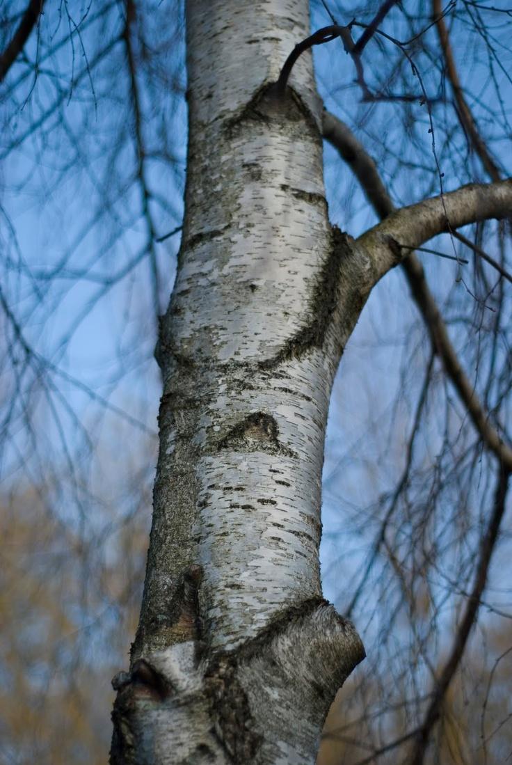 Falling Maple Leaves Wallpaper 77 Best Images About Inspiration Landscape Aspen Amp Birch