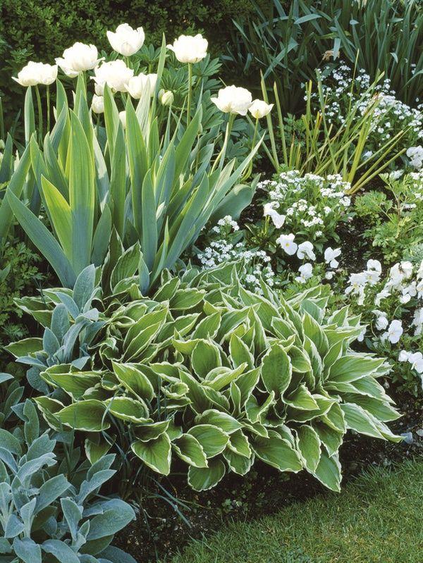 Best 20 Green Garden Ideas On Pinterest Diy Landscaping Ideas