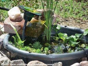 Making A Container Water Garden Homewatergardenideas Com