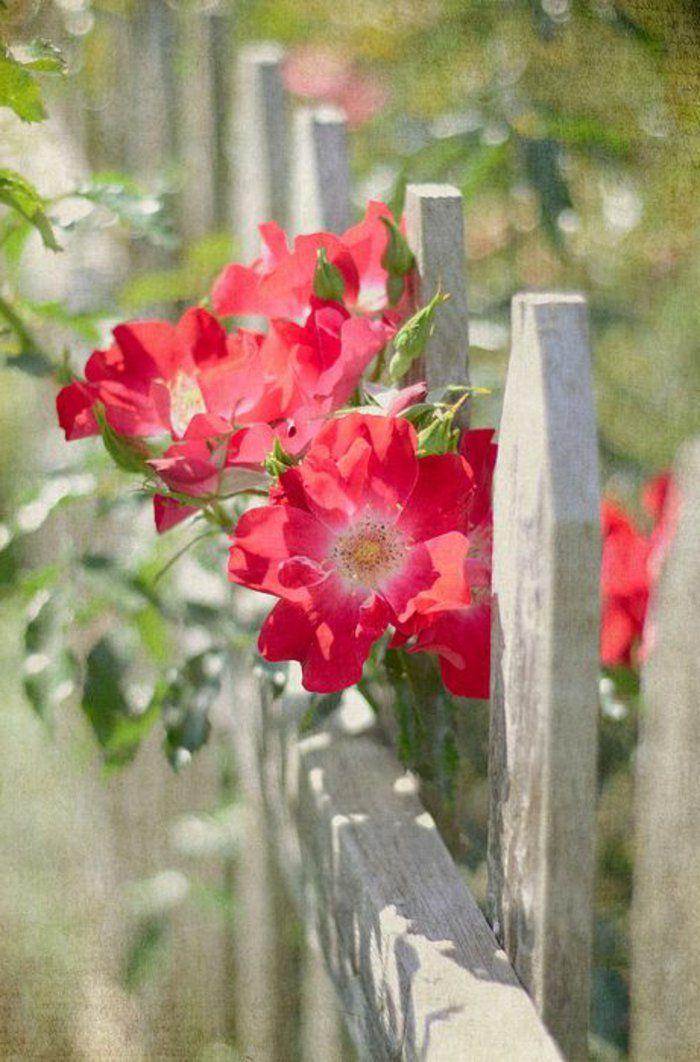 25 Best Ideas About Plante Grimpante Persistant On Pinterest Plante Grimpante Feuillage