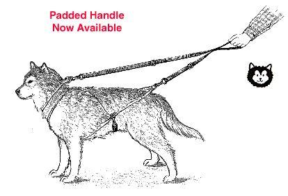 17 Best images about Husky adventure * traineaux à chiens