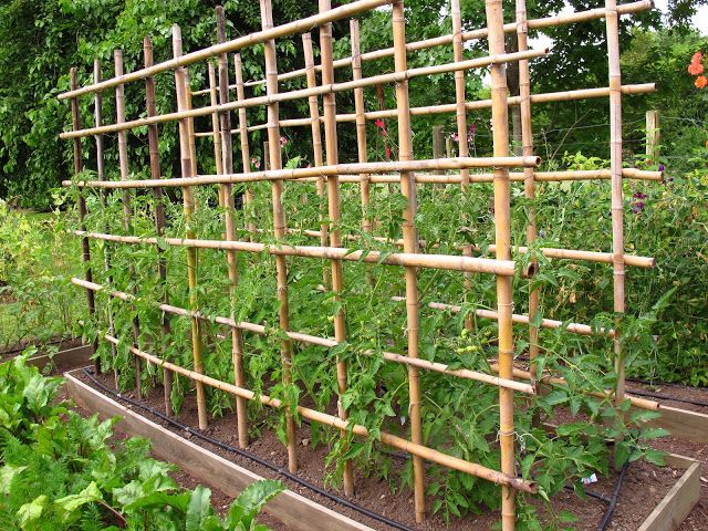 What Plant 4x8 Raised Vegetable Garden