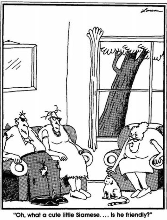 17 Best images about FAR SIDE!!!!!!!!!!! on Pinterest