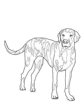Treeing Walker Hound Dog Drawing Sketch Coloring Page