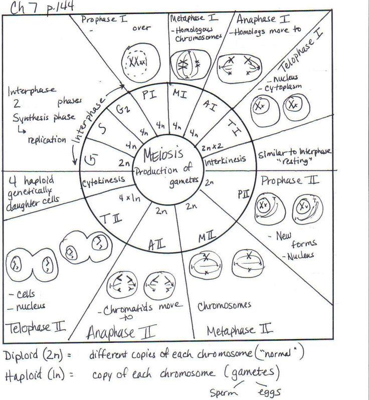 https://app-wiringdiagram herokuapp com/post/laboratory
