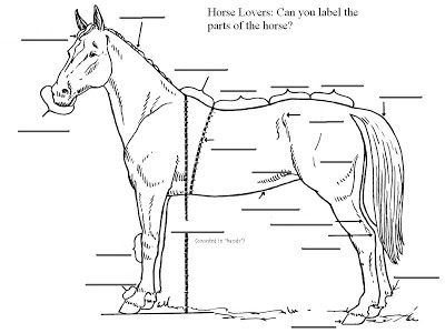 Can you label the parts of a horse? Basic horse anatomy
