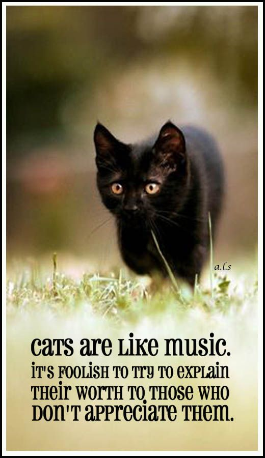 Cats are like music … it's foolish to try to explain their worth to those who don't appreciate them. #ca