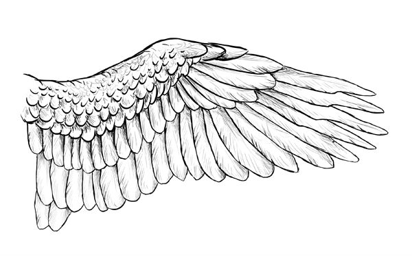 Taking Flight: A Beginner's Guide Into Drawing Wings